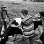 Woodstock 69441-3